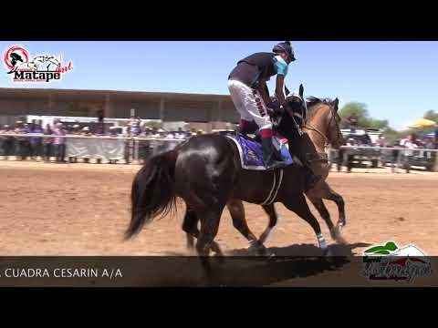 Carreras de Caballos en Phoenix, Arizona 12 de Mayo 2018