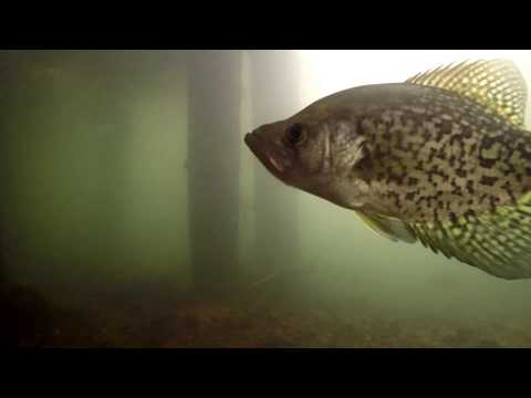 Underwater on the Otter Tail River