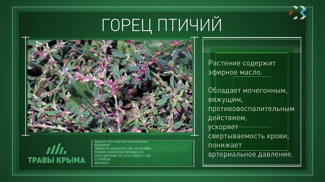 приёмы лекарственные травы крыма фото и описание этим овощам
