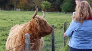 Highland Experience's 1-day Stirling, Loch Lomond and Whisky tour