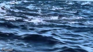 ●•●• Stephen Schlaks ~ Blue Dolphin •●•●