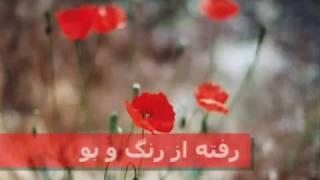 SIMIN GHANEM Gole Goldoone Man (www,WomanPsych.com)