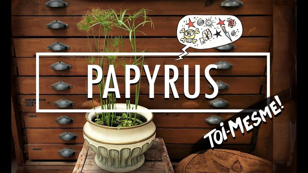Nouvelle vidéo : Papyrus (toi-même)