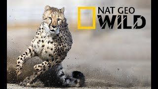 Fastest Animals In The World - Land Animal (2018 Documentary)