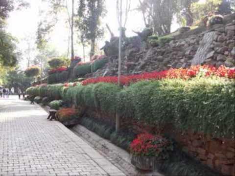 จัดสวนดอกไม้หน้าบ้าน สวนหลังบ้านสวย