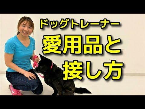 【犬 ドッグトレーナー】ドッグトレーナー愛用品と接し方【犬のしつけ@横浜】byドッグトレーナーエマ