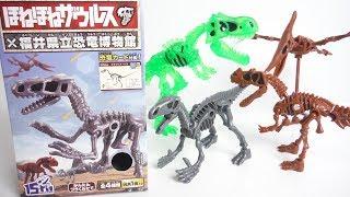 第2弾!! ほねほねザウルス×福井県立恐竜博物館2 全4種 開封 Dinosaur Figure 食玩 Japanese candy toys thumbnail