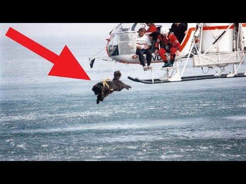 Most Heroic Dogs That SAVED People's Lives!