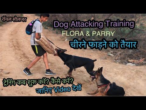 Dog Training German Shepherd Doberman Attacking Skills by Royal Soldier. Part 2