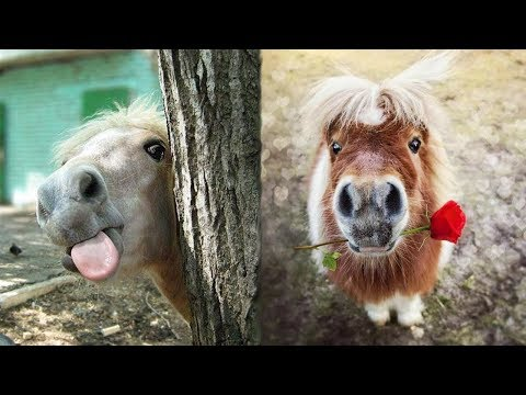 Cute And Funny Horse Videos Compilation Cute Moment Of The Horses - Funny Horses #1