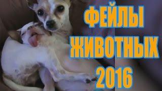 Самые СМЕШНЫЕ И МИЛЫЕ ФЕЙЛЫ ЖИВОТНЫХ 2016 / Нарезк...
