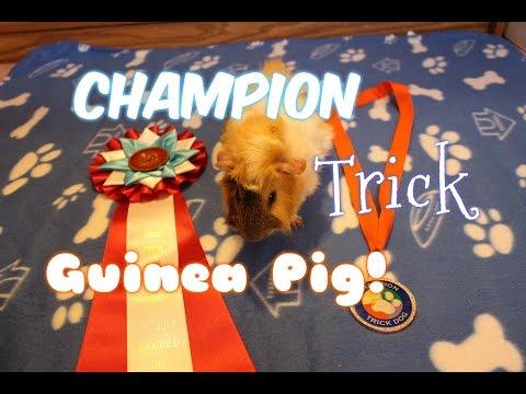 Ace's Champion Trick Title Video!