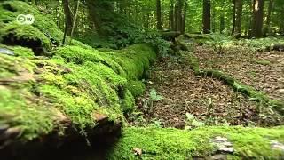 Der Hainich - Nationalpark und Weltnaturerbe | Hin & weg