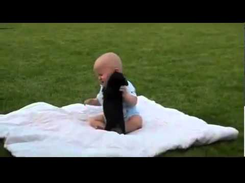 Video lucu bayi berantem sama anjing