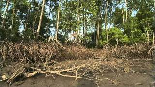 Mangroves: The Roots of the Sea (AMNH, Science Bulletins)