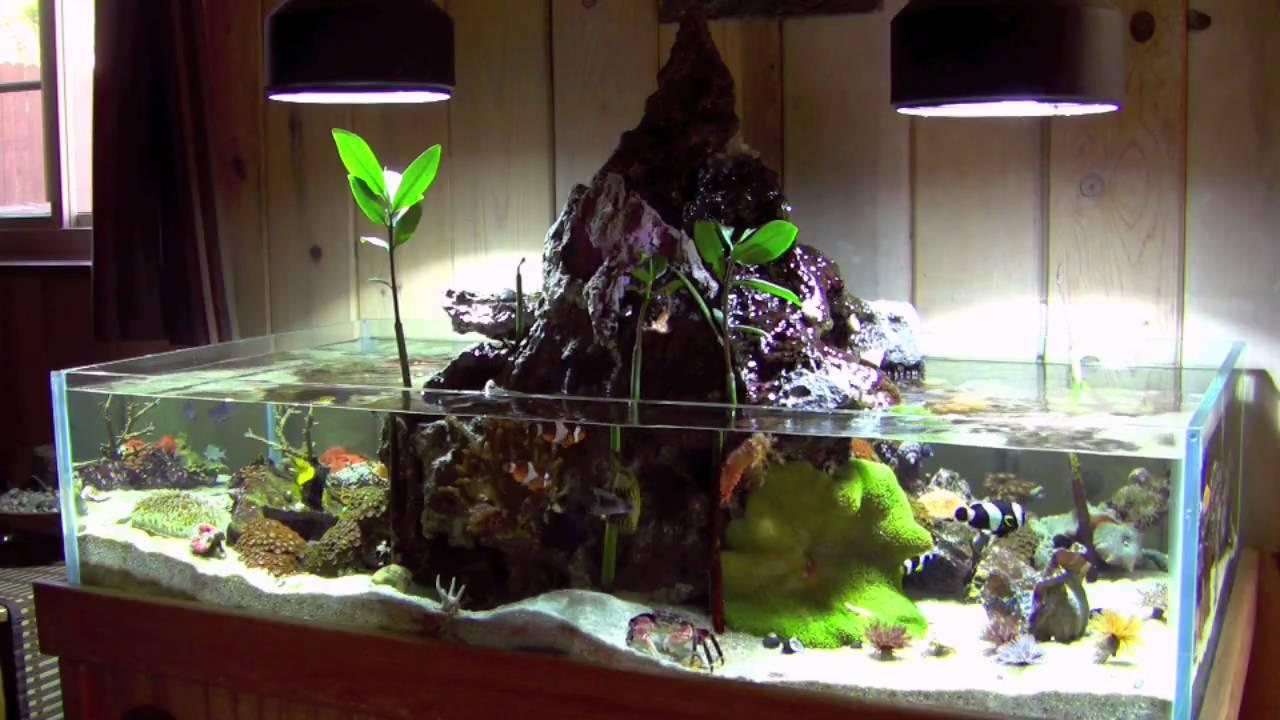 Fish tank volcano - Fish Tank Volcano