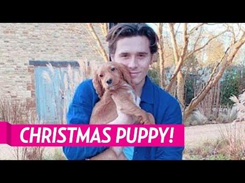 The Beckhams Adopt New Dog For Christmas