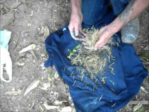 Harvesting and Processing Wild Seeds