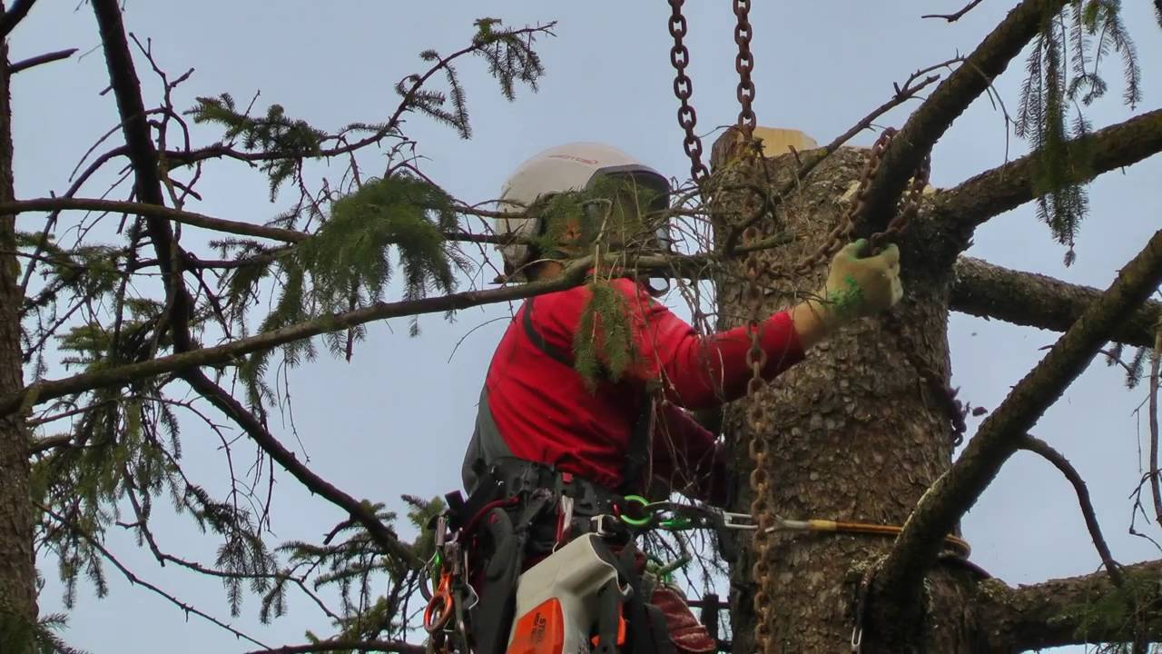 Baumpflege  Müller´s Baumpflege Baumabtrag - YouTube