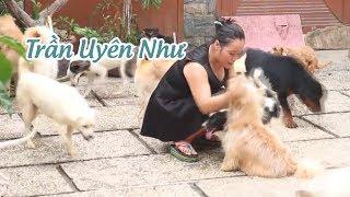 Cô gái xinh đẹp làm 'mẹ' của hàng trăm con chó mèo