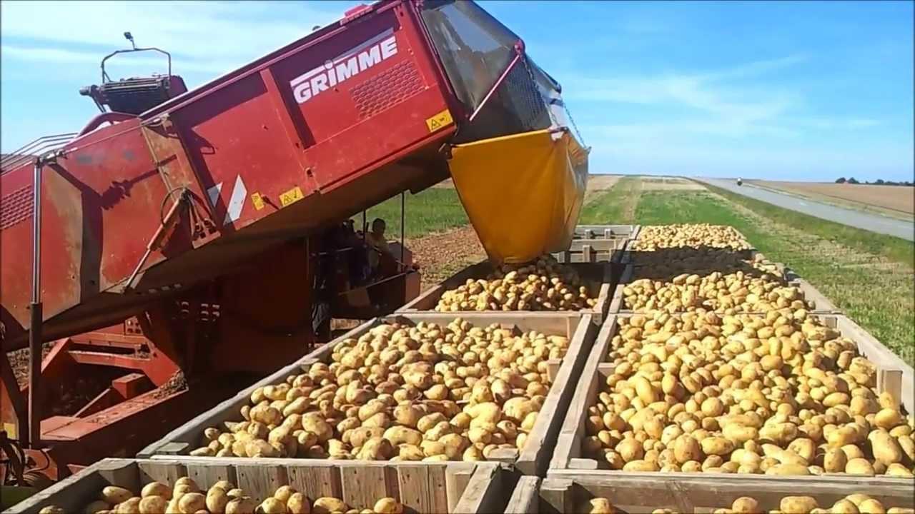 Arrachage pomme de terre 2013 doovi - Pomme de terre rissolees maison ...