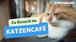 Zu Besuch in einem Katzencafé