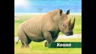 видео Туры в Кению