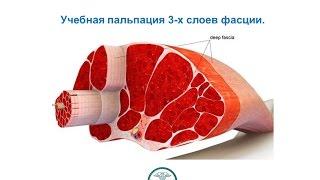 Остеопатия - пальпация 3х слоев фасции - обучение