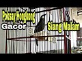 Poksay Hongkong Gacor Siang Malam  Mp3 - Mp4 Download