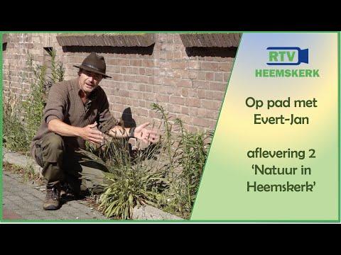 Op pad met Evert-Jan - aflevering 2: Natuur in Heemskerk