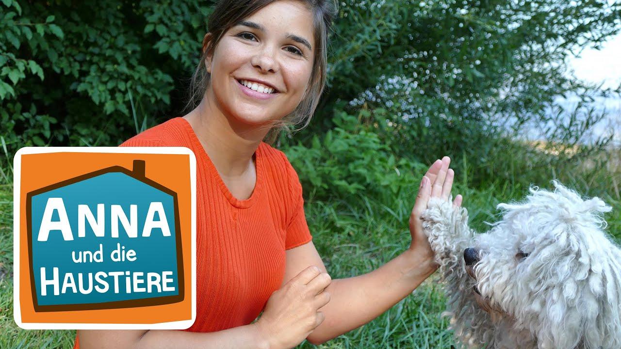 Puli Information Fur Kinder Anna Und Die Haustiere Youtube