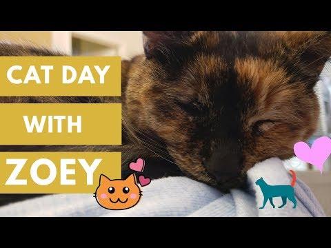 CAT DAY w/ ZOEY (CUTE TORTIE CAT)
