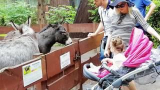 Daily Vlog: Dzień dziecka w Zoo – Vikusia szczęśliwa