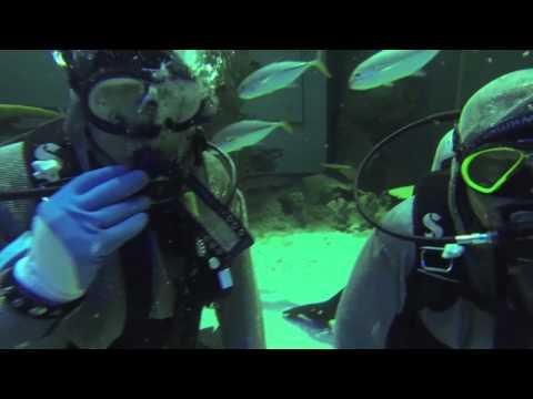 Las Vegas Shark Dive with Jesse Schmidt and Jason Schmidt | 2014