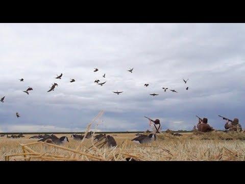 Early Goose Hunting North Dakota 2019 (22 Birds Down)