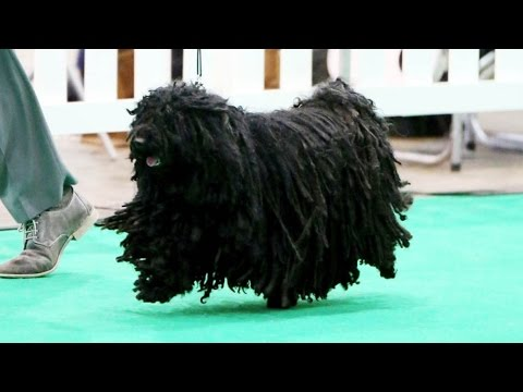 City of Birmingham Dog Show 2015 - Best in Show