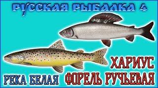 РР4 РЕКА БЕЛАЯ ХАРИУС ФОРЕЛЬ РУССКАЯ РЫБАЛКА 4 БЕЛАЯ ХАРИУС RUSSIAN FISHING 4 BELAYA GRAYLING