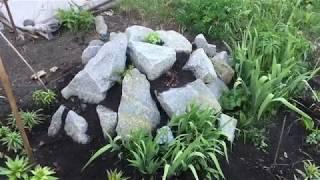Садовый влог №1