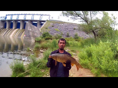 Carp Fishing   @ Fanshawe Conservation London, Canada