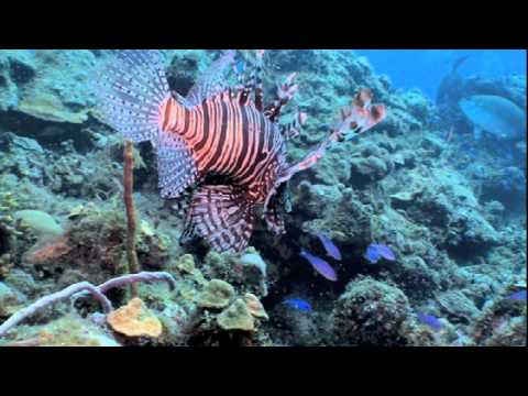 Waterways Episode 262 - Invasive Exotics of South Florida