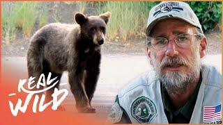 Wild Bear Intrudes Community | The Bear Whisperer | Real Wild Documentary