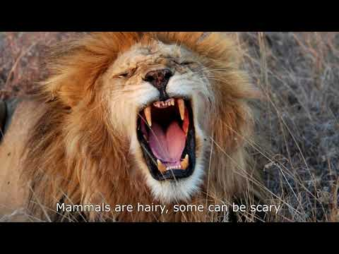 The Mammal Song