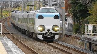 JR阪和線 新家駅1番ホームを287系特急パンダくろしおが通過