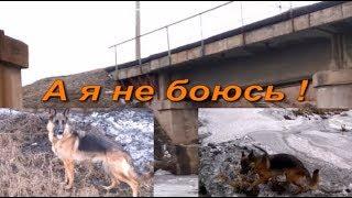 Проверка собаки на громкие звуки поезда !