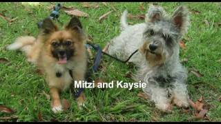 Mitzi And Kaysie At Doggie Camp With Balanced Obedience Dog And Puppy Taining
