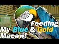 FMPF: My macaw is a little spoiled...