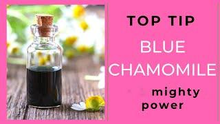 Blue Chamomile. Why the colour matters