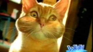 Новый кошачий туалет CatSun
