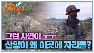 산양이 '서울 도심' 속에 자리 잡은 이유는?ㅣ순간포착…
