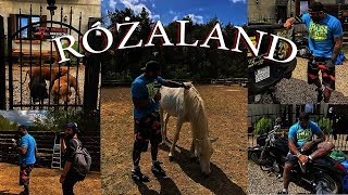 █▬█ █ ▀█▀ - Różaland - Jak wygląda świat Marcina Różalskiego?